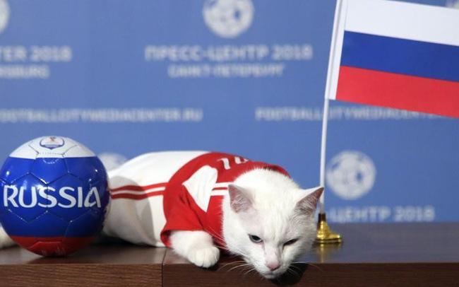 Mèo tiên tri Achilles dự đoán ĐT Nga sẽ giành chiến thắng trước ĐT Ả-rập Xê-út