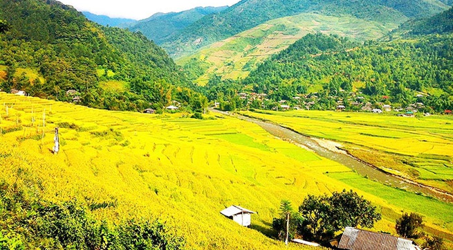 Rice paddies in Tu Le Valley bask in the golden glow of autumn