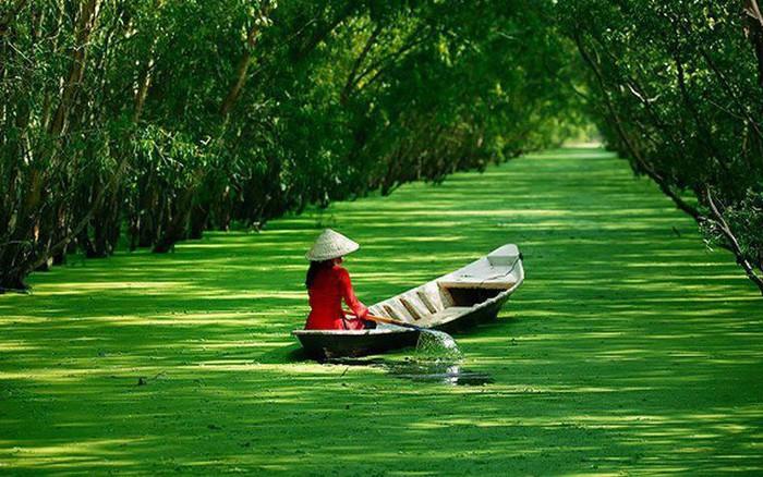 Kết quả hình ảnh cho rừng tràm trà sư