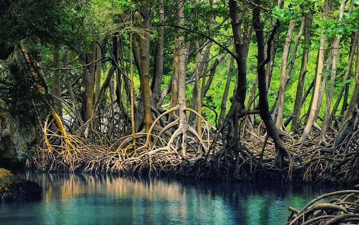 Rừng đước Cà Mau - Món quà vô giá của thiên nhiên | VTV.VN
