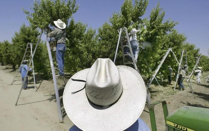 Mỹ: Bang California cấm sử dụng thuốc bảo vệ thực vật do nguy cơ gây hại cho sức khoẻ
