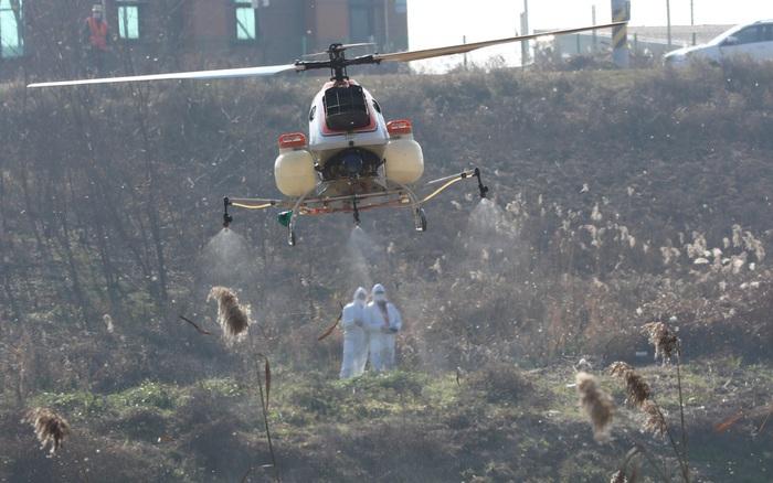 Hàn Quốc phát hiện các trường hợp nhiễm chủng cúm gia cầm độc lực cao tại trang trại