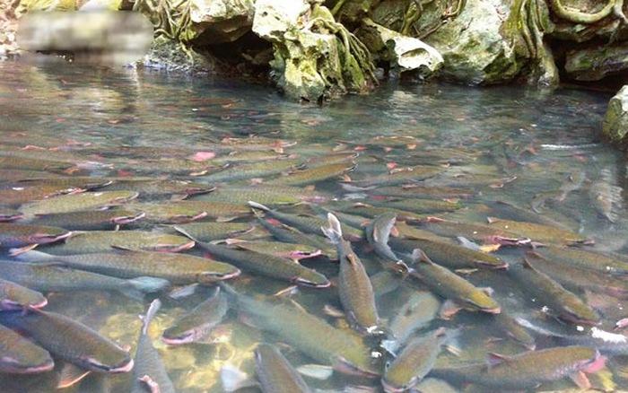 Suối lúc nào cũng đầy cá