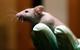 Phát hiện khả năng tái tạo não từ tế bào trong não chuột
