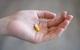 Israel thử nghiệm vaccine COVID-19 dạng viên uống
