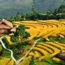 """Ruộng bậc thang Việt Nam vào danh sách cảnh quan """"đẹp đến khó tin"""""""
