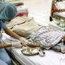 Cảnh báo vào mùa bệnh viêm não Nhật Bản