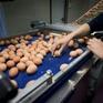 Slovakia phát hiện trứng nhiễm Fipronil