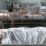 TP.HCM: 18/24 quận, huyện có số ca bệnh sốt xuất huyết tăng cao