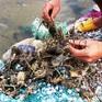 Hàng nghìn hộ dân Phú Yên điêu đứng vì tôm hùm chết hàng loạt