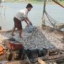 An Giang tiếp tục chưa cho phép khai thác cá linh