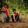 Mùa săn nhện làm… thức ăn ở Campuchia