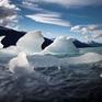 Hơn 15.000 nhà khoa học gửi thư cảnh báo viễn cảnh tuyệt diệt của Trái đất