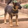 Cách quản lý vật nuôi, phòng bệnh dại hiệu quả