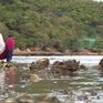 Chiêm ngưỡng vẻ đẹp của biển cạn ở Nhất Tự Sơn, Phú Yên