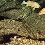 Phát hiện loại bọt biển có thể chữa ung thư tuyến tụy