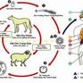 Hướng dẫn phòng và điều trị bệnh giun đũa chó mèo