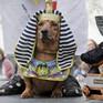 Độc đáo cuộc diễu hành của các chú chó