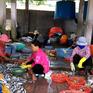 Cận cảnh quy trình ngâm cá bằng... thuốc tẩy giun động vật