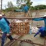 Giải pháp bền vững cho ngành cá tra