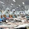 Xuất khẩu cá tra sang thị trường Trung Quốc tiếp tục tăng trưởng tốt