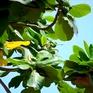 VTVTrip: Bóng dáng cây bàng hiện hữu ở Côn Đảo
