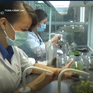 Việt Nam chi khoảng 500 triệu USD nhập giống cây trồng
