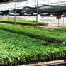 Cần tổ chức lại khâu sản xuất cây giống tại ĐBSCL