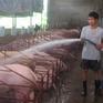 Chuyển dịch chăn nuôi vùng Đông Nam Bộ theo hướng công nghệ cao