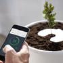 Chậu cây thông minh biến… tro cốt thành cây xanh