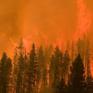 Cháy rừng nghiêm trọng tại ở Đông Nam Australia