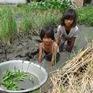 Thương 3 chị em mồ côi quần áo rách bươm, chạy ăn từng bữa