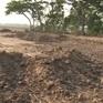 Đồng Tháp: Phạt 120 triệu đồng 8 vụ bán đất mặt ruộng