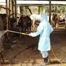 Đã khống chế được dịch bệnh trên gia súc, gia cầm