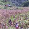 Định canh định cư tại Cao Bằng: Đầu tư cao, hiệu quả thấp