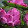 Hoa sen chớm nở đầu mùa đẹp dịu dàng góc phố Hà Nội