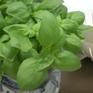 Sốc điện giúp giữ hương vị thảo dược sau sấy
