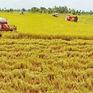 Mới chỉ có 1% doanh nghiệp dầu tư vào nông nghiệp