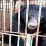 """""""Chạy vì gấu"""" - sự kiện mở đầu Tuần lễ gấu tại Việt Nam"""