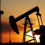 CNBC: Giá dầu diễn biến tồi tệ nhất trong 20 năm qua