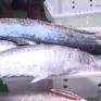 Sức mua hải sản đã dần hồi phục