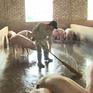 Bộ NN&PTNT kêu gọi doanh nghiệp hỗ trợ người chăn nuôi