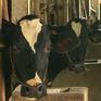 Người dân Sóc Trăng thoát nghèo bền vững nhờ Hợp tác xã bò sữa