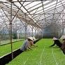 Vướng mắc cản dòng vốn tín dụng 100 tỷ đồng cho nông nghiệp công nghệ cao