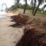 Nuôi bãi tạo bờ để cứu biển Hội An