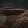 Bắt các đối tượng khai thác cát trên sông Hồng
