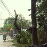 Khắc phục ảnh hưởng của bão số 14 tại TP.HCM