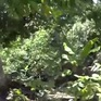 Miền quê của những tổ ấm xanh, sạch, đẹp