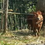 Quảng Trị ngăn chặn dịch lở mồm long móng ở Lao Bảo