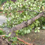 Hà Tĩnh: Lốc xoáy làm nhiều nhà dân bị hư hỏng